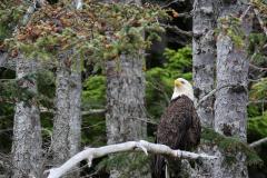 Alaska_- Eagle's rest