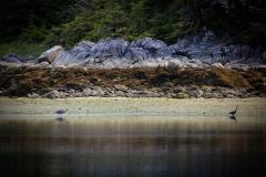 Alaska_- Low Tide