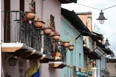 Quito-Geraniums